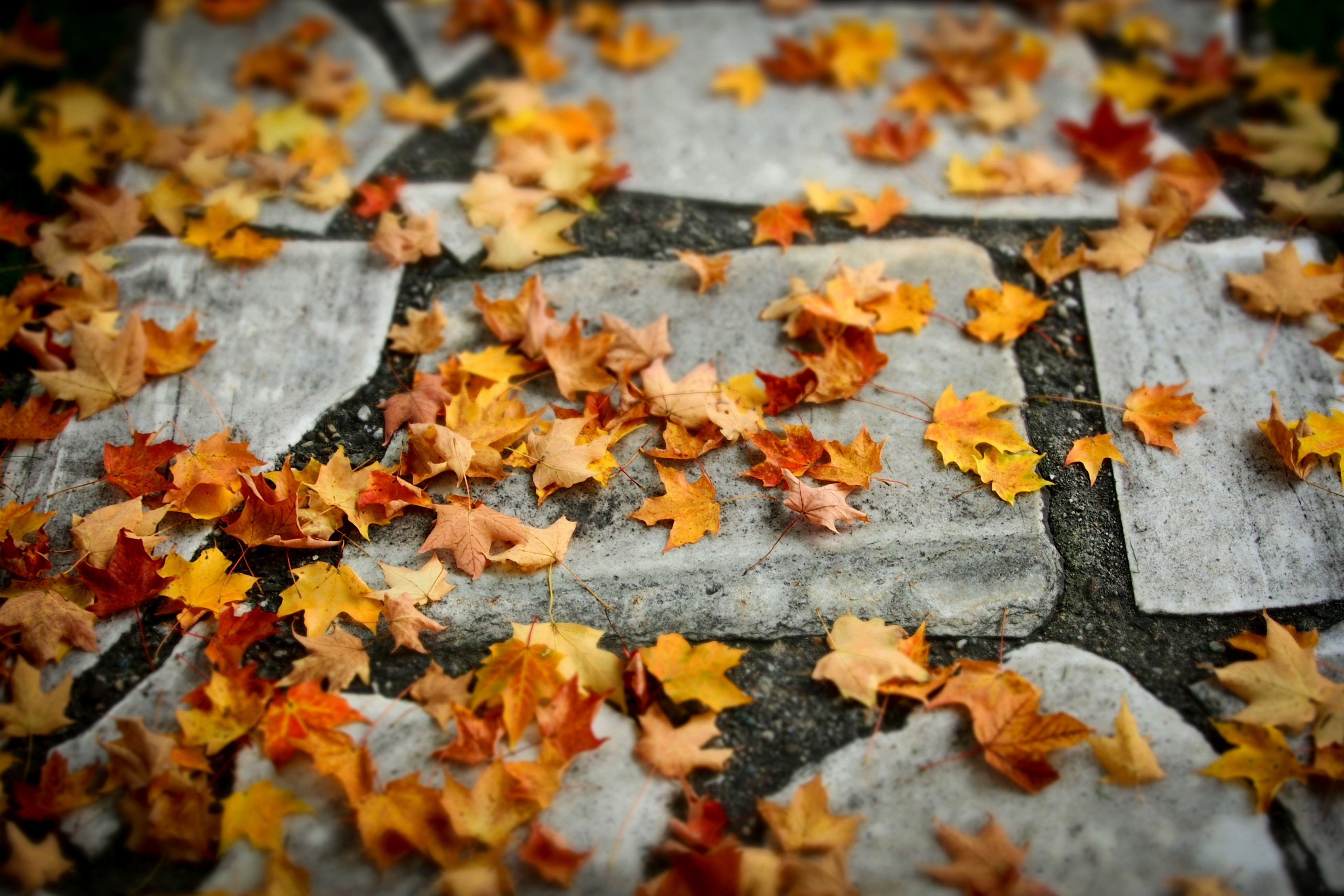 Autmun Leaves-1