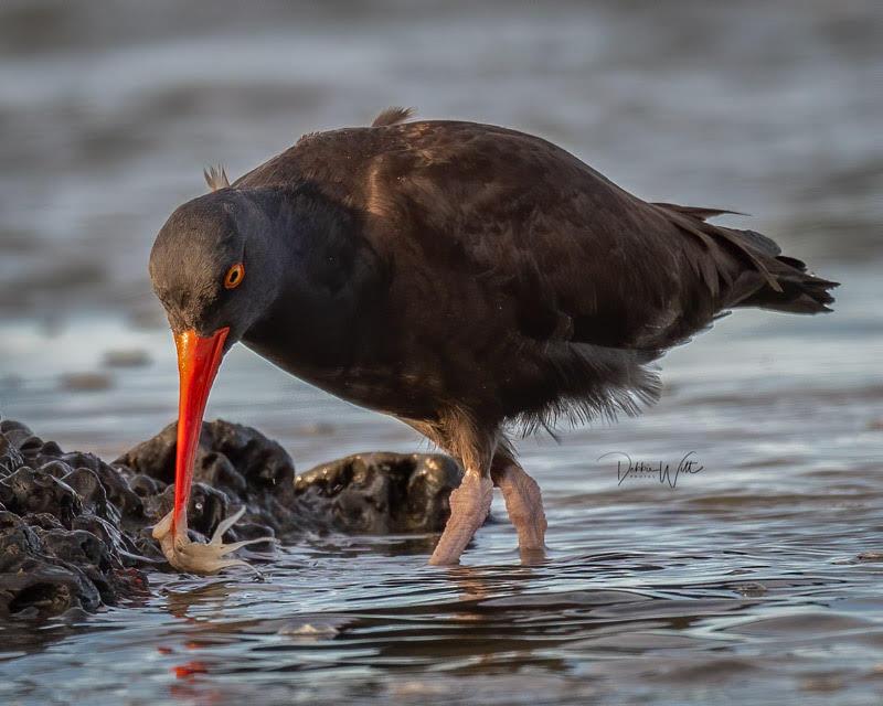 bird picking up  food in beak